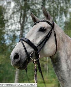 Sandviks hästgård dressyrkurs 28 februari 2021