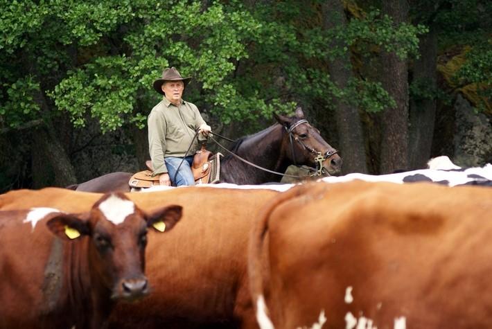Ranch Stabby Gard
